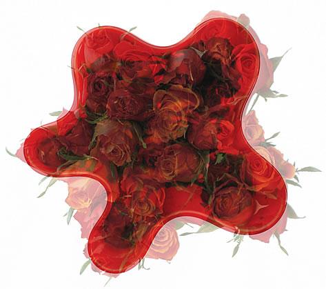 michael-petry_red-roses-2