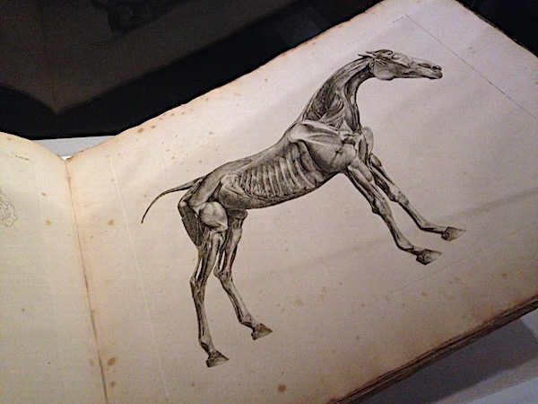 George Stubbs on the first accurate records of equine anatomy