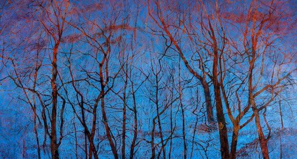 Vicky Crowe  Treetops