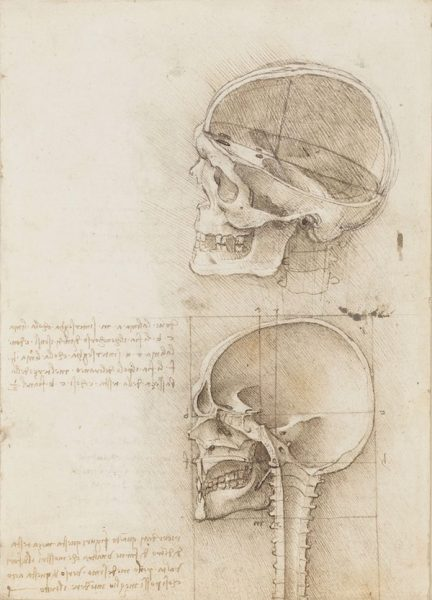 LEONARDO DA VINCI (VINCI 1452-AMBOISE 1519) Recto: The skull sectioned. Verso: The cranium