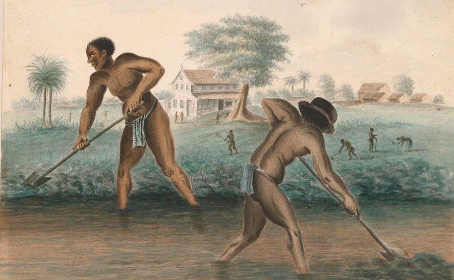 Rijksmuseum Slavery Exhibition